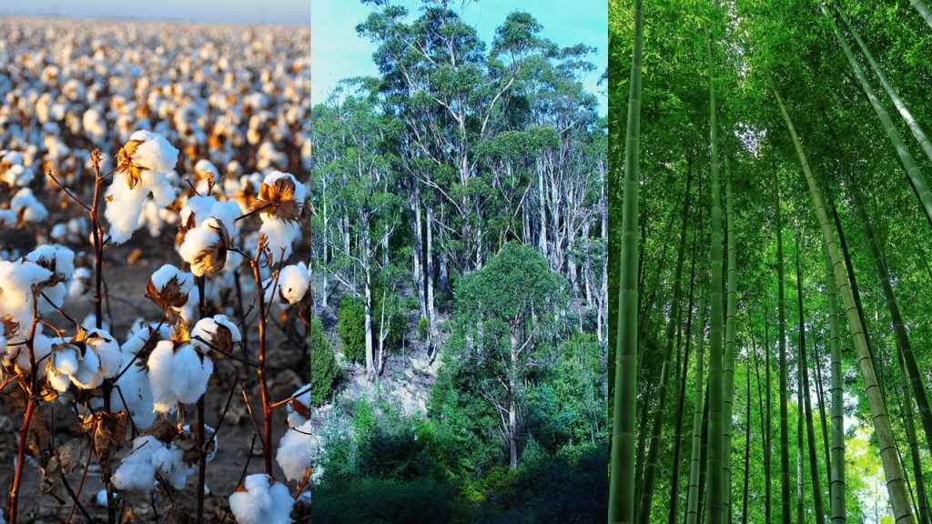 Principais fontes de celulose bioplástico