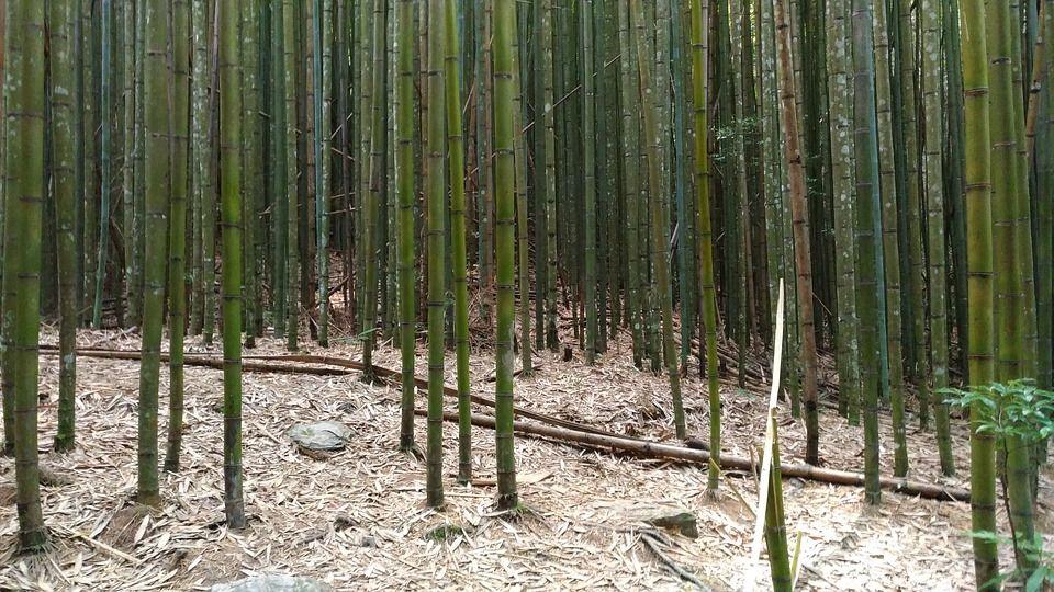 Celulose de bambu bioplástico